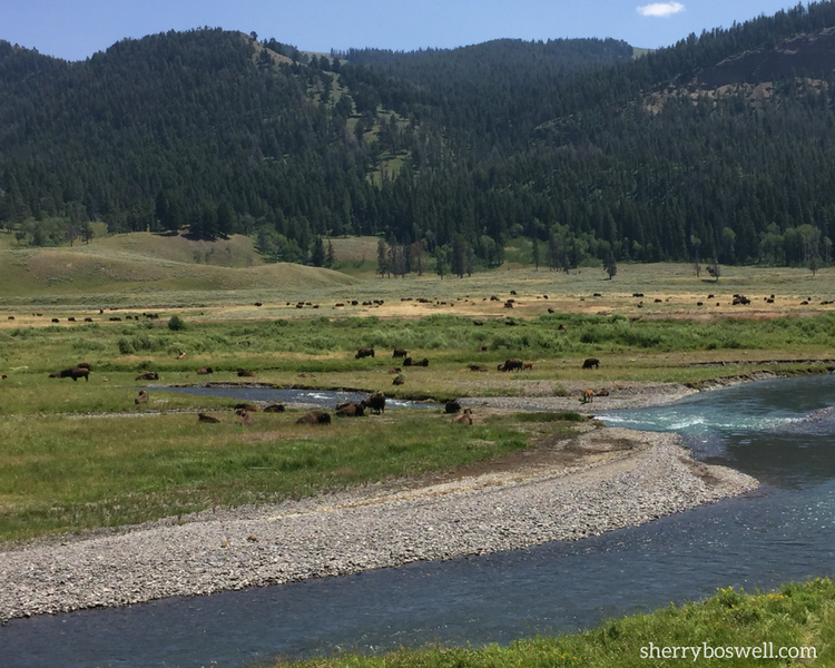 Have a great Yellowstone vacation with these 9 Yellowstone tips. We cover what to bring, how to make reservations, what to see and how to save money.