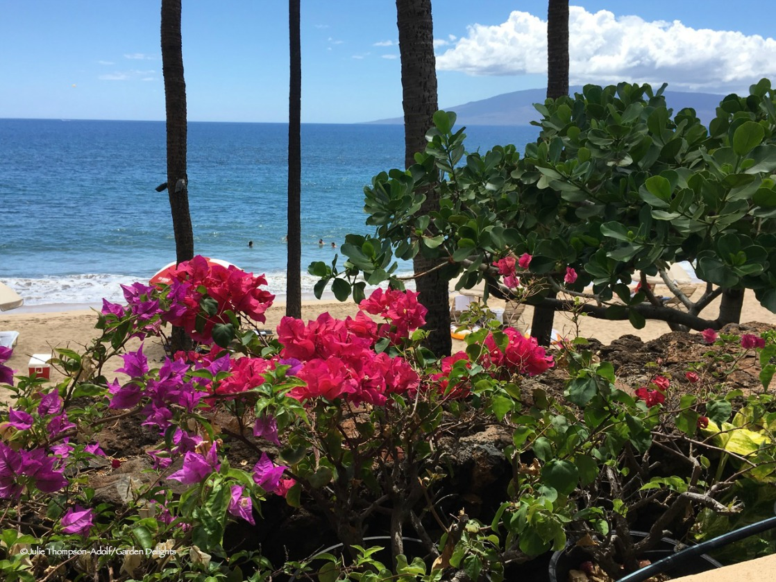 How To Grow Hawaiian Flowers At Home Growing Hawaiian Flowers