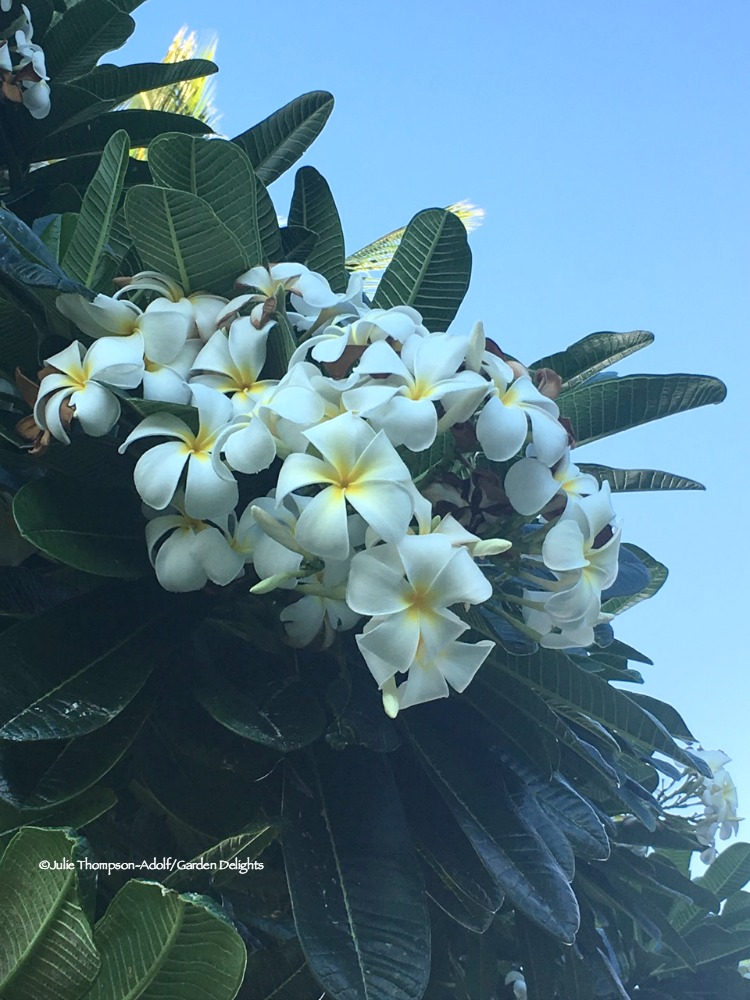 From tropical hibiscus to fragrant plumeria, it's easy to learn how to grow Hawaiian flowers at home. Here are 6 tropical flowers to grow.