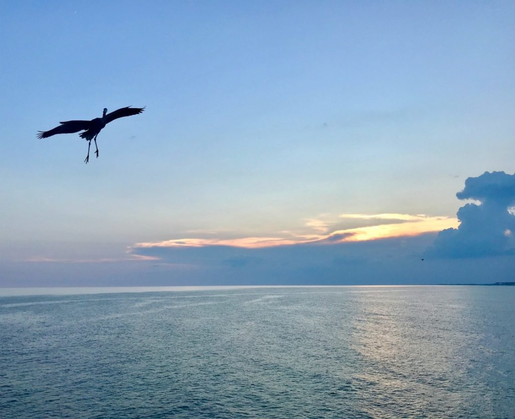 The stunning sunsets and wildlife of the Florida Panhandle beaches