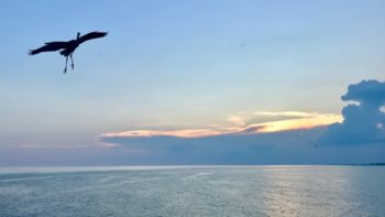 The stunning sunsets and wildlife are all reasons why we visit the Emerald Coast each year.