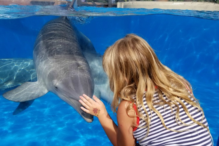 SeaWorld Halloween Spooktacular Tips - Don't miss the dolphin nursery.
