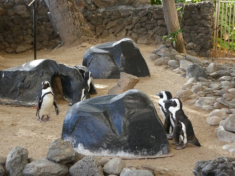 Family friendly hotels in Maui - penguins at the Hyatt Regency Maui on Ka'anapali Beach.