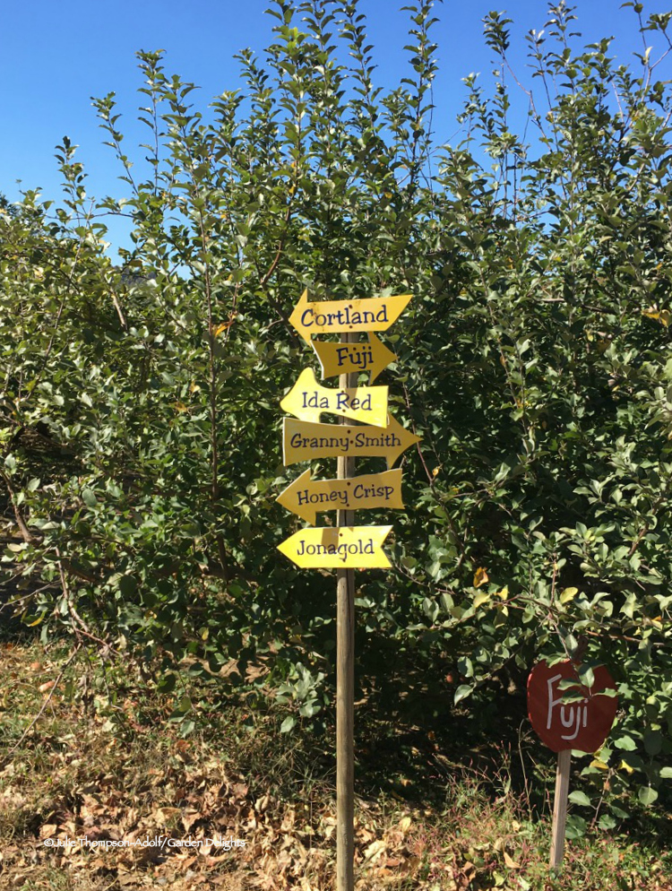 Remember to select the right variety for your project when apple picking.