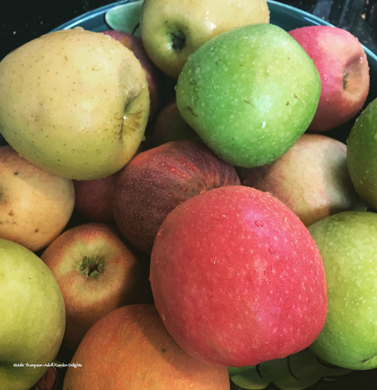 With many colors and varieties to choose from, you'll find something for everyone when apple picking.