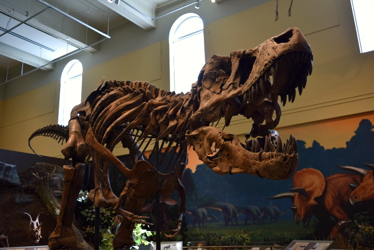 Head to the Dinosaur Hall in Carnegie Museum of Natural History - a best indoor Pittsburgh activities with kids hot spot!