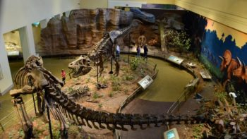 A fun indoor Pittsburgh activity is a trip to the Dinosaur Hall at Carnegie Museum of Natural History!