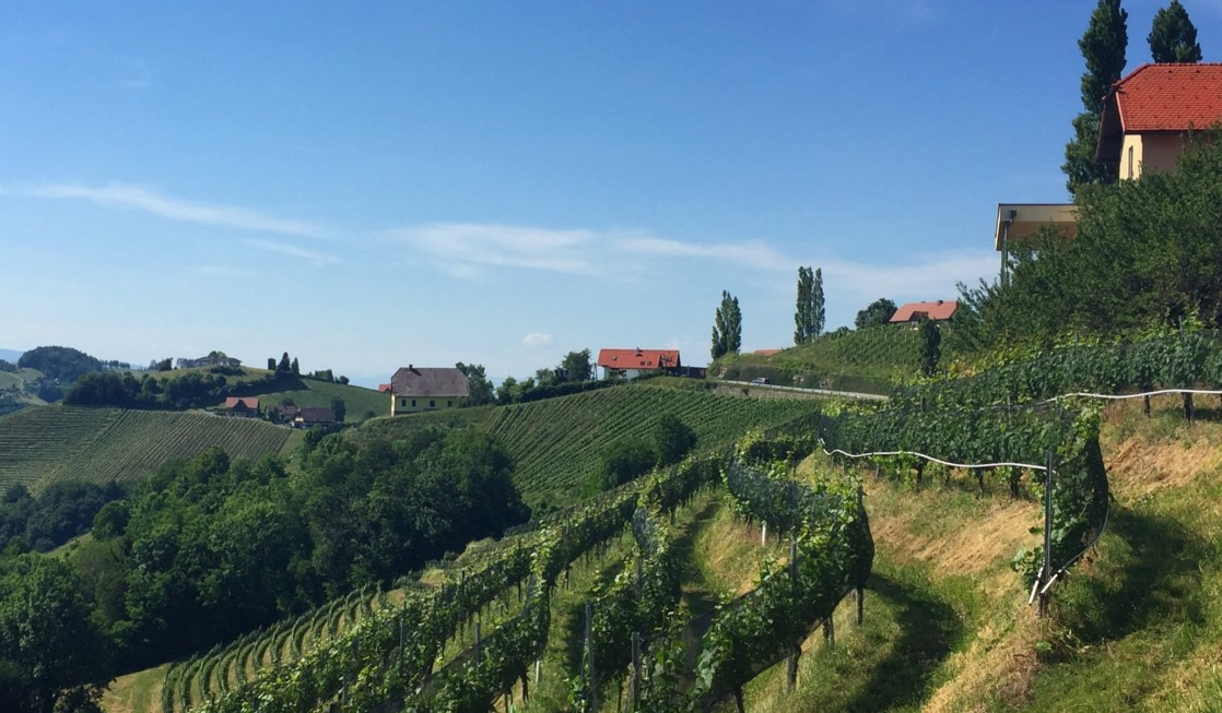Exploring Styrian vineyards is among the things to do in Graz, Austria