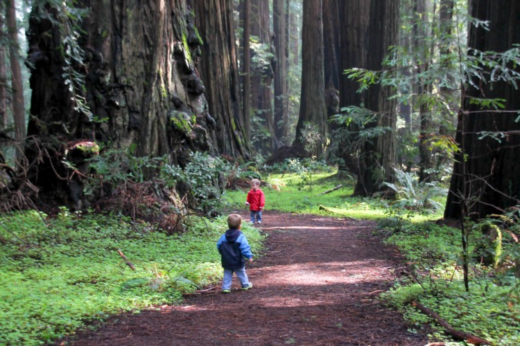 Our son chose the Redwoods as one of our family travel activities when we let our kids help plan vacation