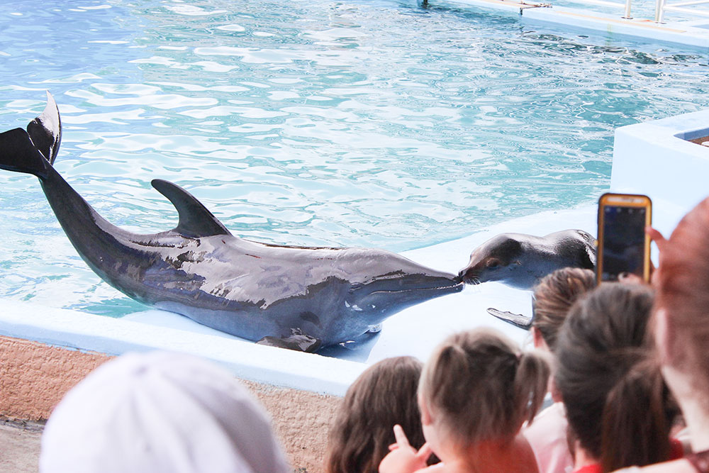 Catch a dolphin show between rain showers during rainy days in Panama City Beach, FL.