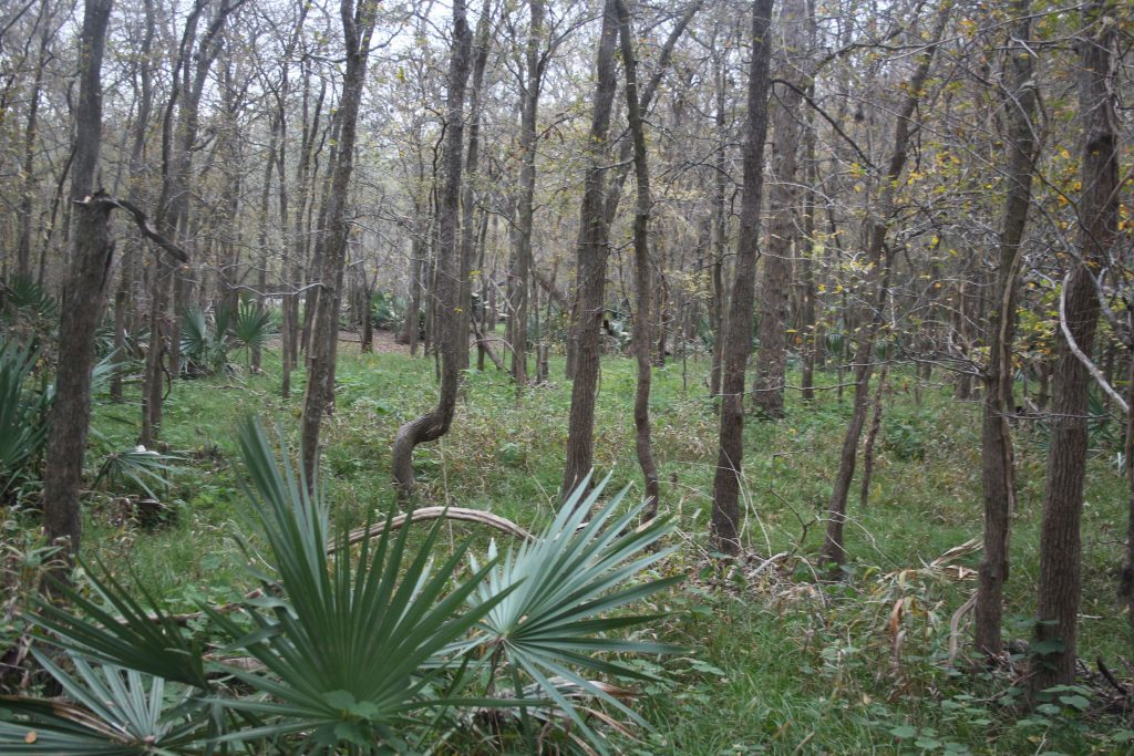 Palmetto State Park near Gonzales Texas