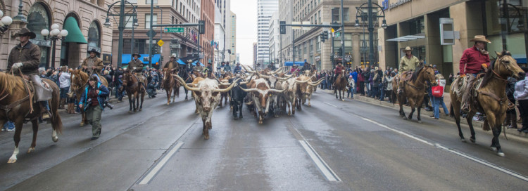Free things to do in Denver in the winter includes lining up for the National Western Stock show Parade annually each January.