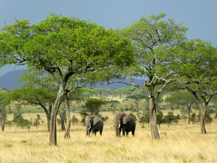 African safari planning tips - elephants on the Serengeti