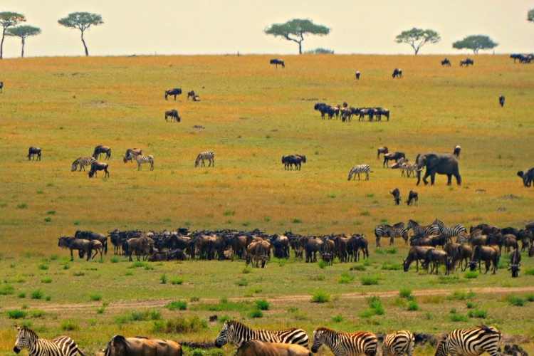 African safari planning tips - The Great Migration on the Serengeti