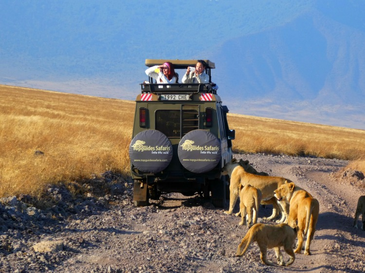 Lion encounters in the Ngorongoro Crater - African safari planning tips