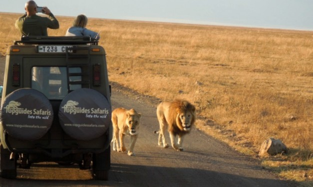 What You Need to Know When Planning an African Safari