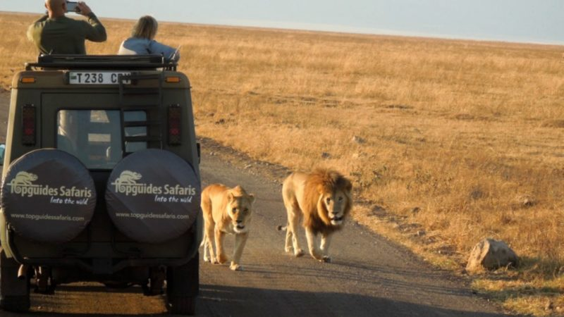 Up close with the lions - African safari planning tips