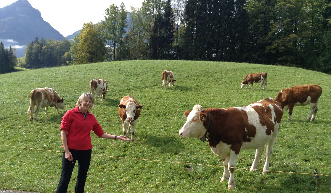 Don't be surprised to see cows on your self-guided Austrian cycling tour!