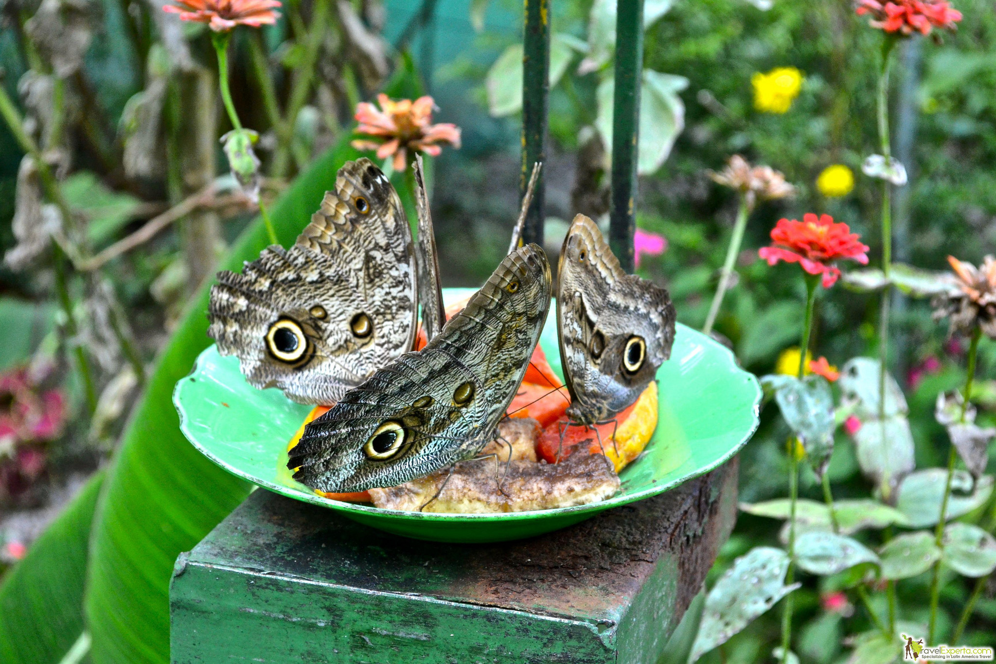 family visit to butterfly garden in arenal