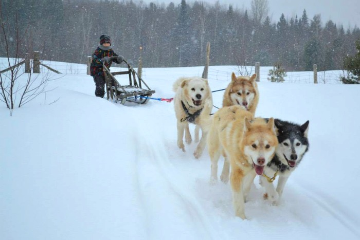 Winter vacation ideas include Dog sledding in Canada.
