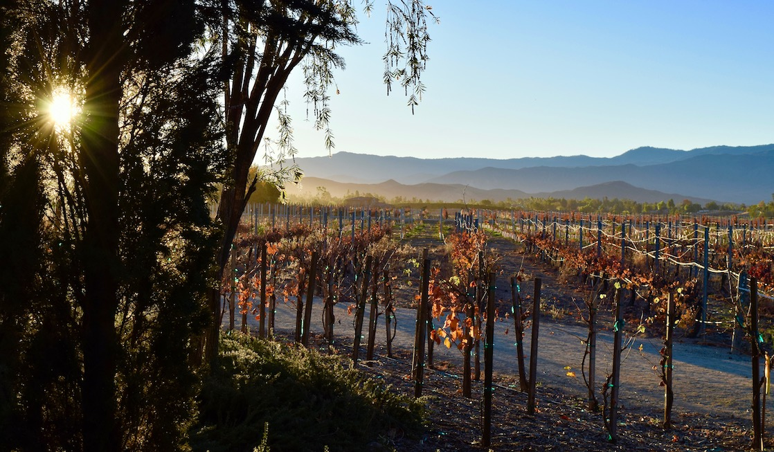 When spending 2 days in Temecula CA, make time for a winery tour to see beautiful vineyard - one of the best things to do in Temecula CA