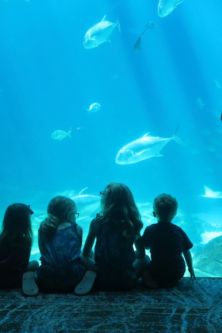 The Georgia Aquarium is a great off the beaten path spring break idea.