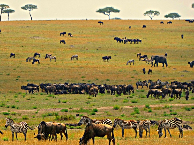 One of the top international destinations to visit in 2018, raw and unedited, once you experience the great migration on your Tanzaniam safari, you will never be the same
