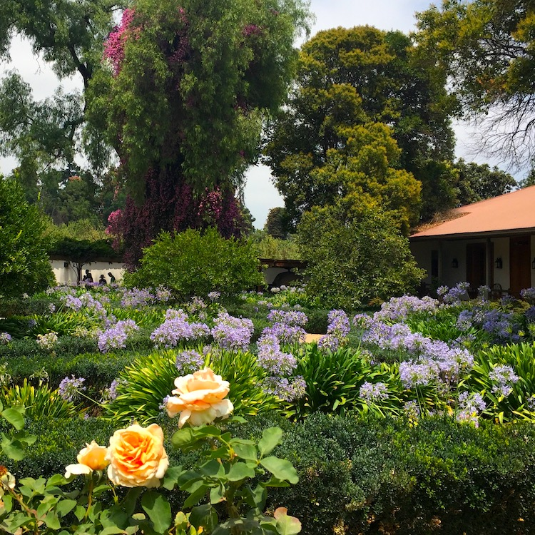 Chile travel advice includes trying Chile's excellent wine at Santa Rita vineyard
