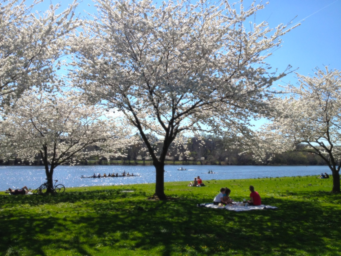 Philadelphia in a weekend can include cherry blossoms in parks around Philly