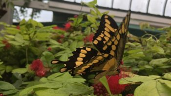 Looking for a weekend in Key West itinerary filled with family fun? A visit to the Key West Butterfly and Nature Conservatory is a must!