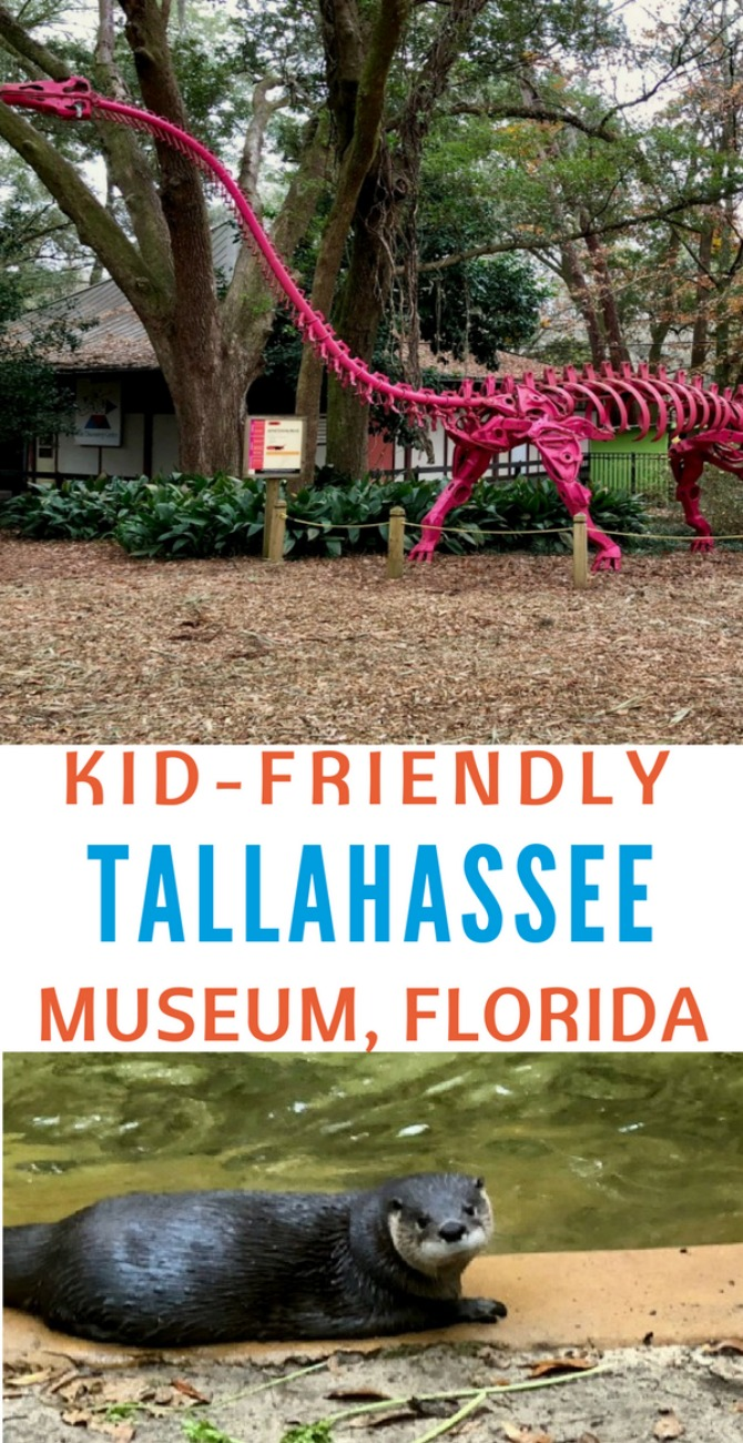 So many cool things to see and do at the kid-friendly Tallahassee Museum in Florida.