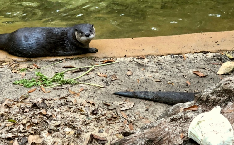 The animals are amazing at the kid-friendly Tallahassee Museum.