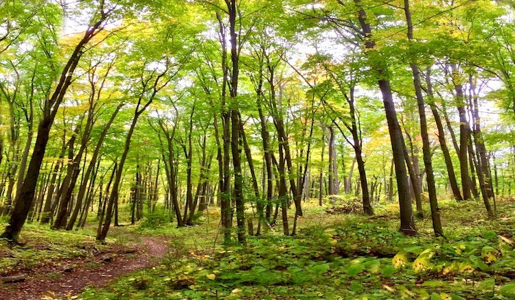 Wisconsin small town getaway adds walks in the woods to downtown village events.