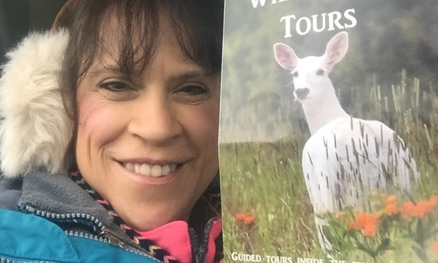 How to see the Magical Seneca White Deer (and Why You Should Go)
