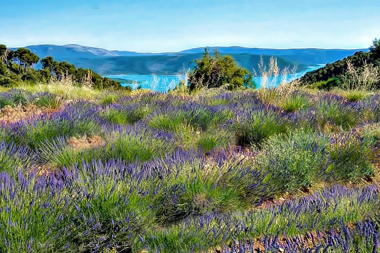 Spectacular lavender fields at the bottom of Gorges du Verdon in southern France, will make fall in love with Provence.