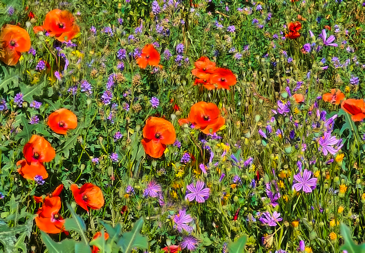 Meadows in the lower areas of Verdon Gorges in France will speak to your senses .