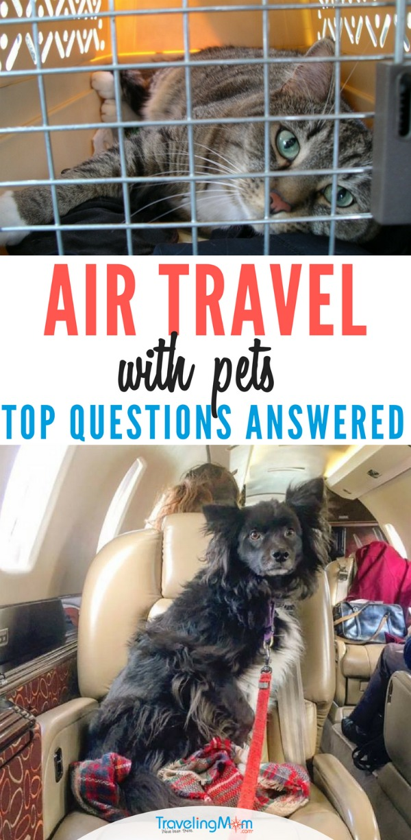 Air travel with pets can be fun, but you need to plan ahead. Make sure you're asking the right questions.