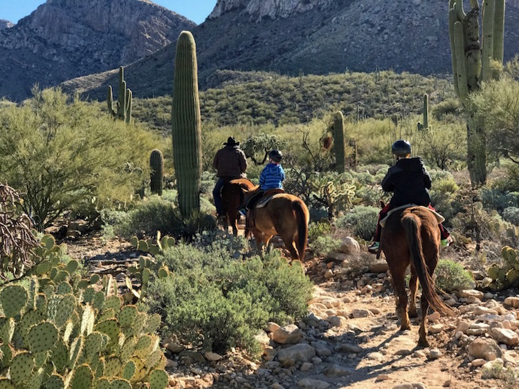 One of the best things to do in tucson with kids is horseback riding in the desert