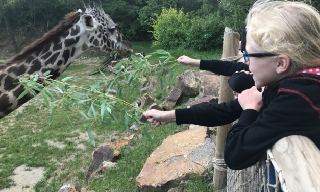 Overnight at the Zoo: Camping with Giraffes at the Cincinnati Zoo