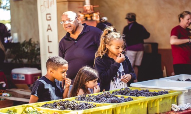 8 Kid-Friendly Wineries in the US that Offer Fun Activities
