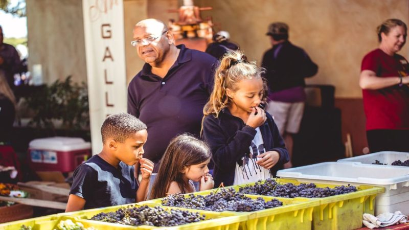 looking for kid-friendly wineries in the US? We've got a great list that kids will love!