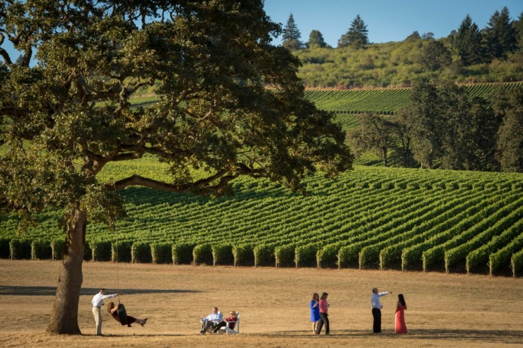 Stoller Family Estate, a kid-friendly winery in the US, has a quaint tree swing - perfect for kiddos!