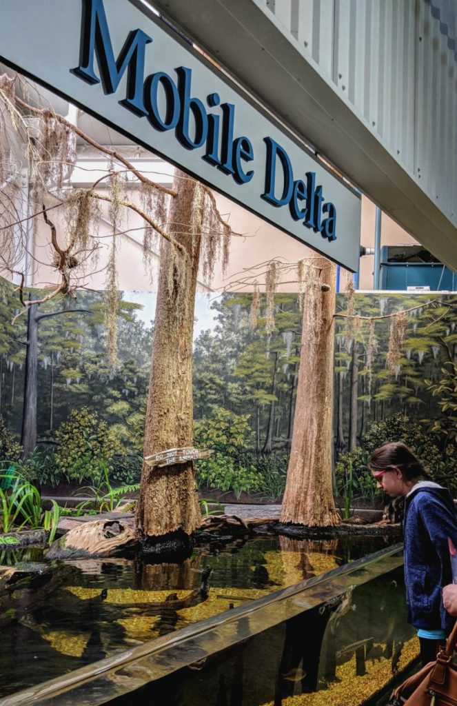 Things to do in Mobile Alabama - learn about the Delta ecosystem at the Estuarium.