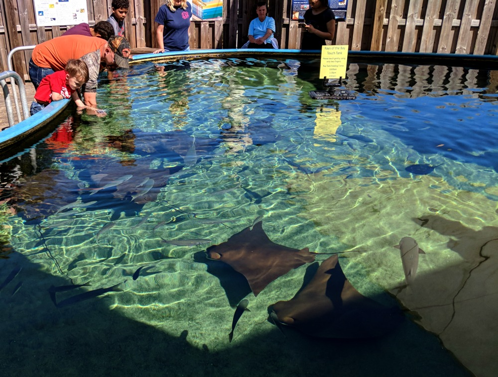 Things to do in Mobile Alabama - touch the stingrays at the Estuarium.
