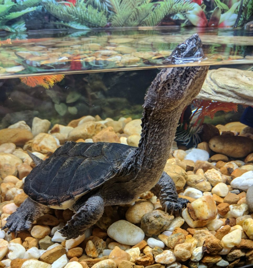 Things to do in Mobile Alabama - see turtles at the 5 Rivers Delta Center.