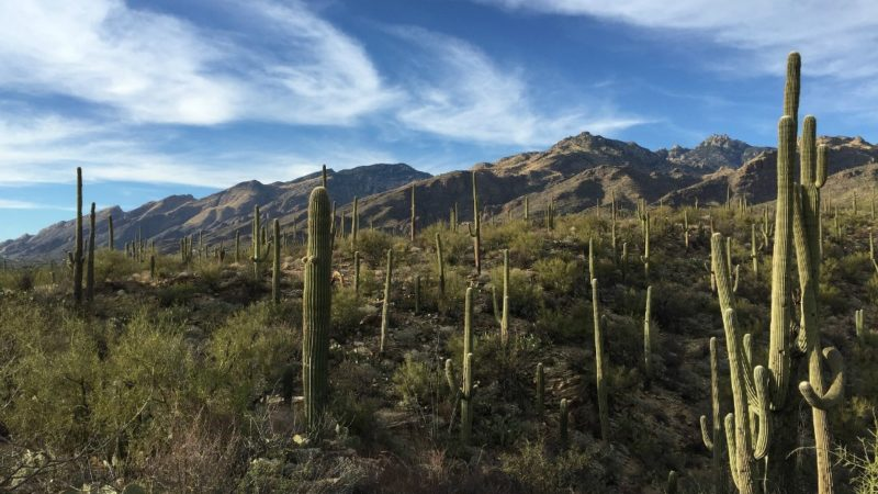 17 Fun Things To Do In Tucson With Kids Travelingmom