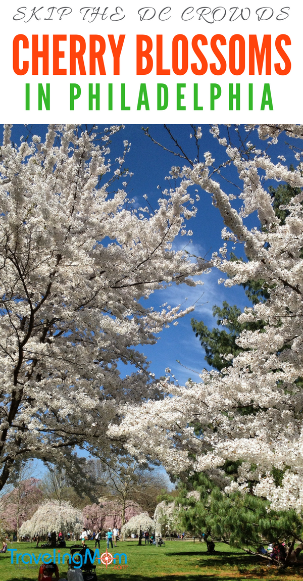 Where to see cherry blossoms in Philadelphia includes Fairmount Park's Horticultural Center, Kelly Drive, and the Japanese House in West Philadelphia