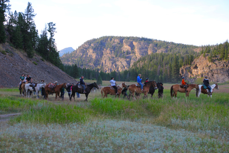 Take a trail ride. Ultimate Guide to Yellowstone National Park.