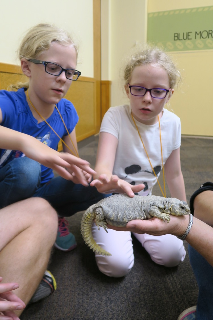 two school-aged girls pet a reptile at the Cincinnati zoo, during one of the zoos overnight programs