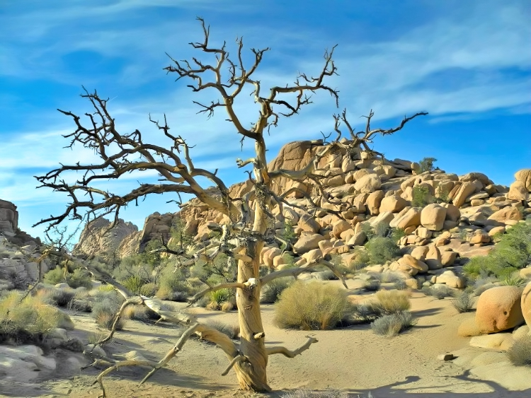 It is hot out there at Joshua Tree National Park in California.